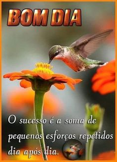 Bom Dia Fruit Shakes, Maria Jose, Color Of Life, Types Of Food, Believe In You, Good Morning, Photo And Video, Animals, Gifs
