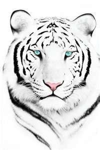 "Animals Cross-stitch pattern ""White Tiger"" Pattern Name: White Tigger Fabric: Aida Rue X Stitches Size(s): 14 Count, X cm 16 Count, Tiger Drawing, Tiger Art, Tiger Head, Tiger Painting, Art Tigre, White Tiger Tattoo, Tattoo Black, Tiger Face Tattoo, Jaguar Tattoo"