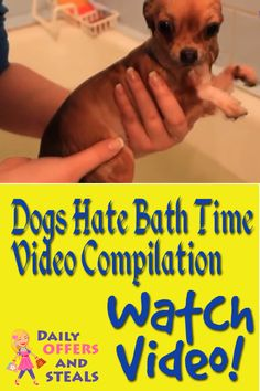Funny compiliation of dogs who hate taking a bath. Watch this hilarious video!  ==> https://www.dailyoffersandsteals.com/blogs/daily-offers-and-steals-blog/dogs-hate-bath-time-video-compilation