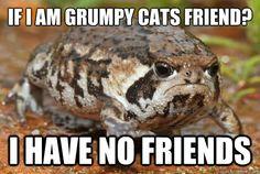 If I am Grumpy Cat's friend...Grumpy Frog!