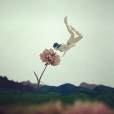 diving for flowers