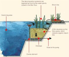 What You Need To Know About Natural Swimming Pools