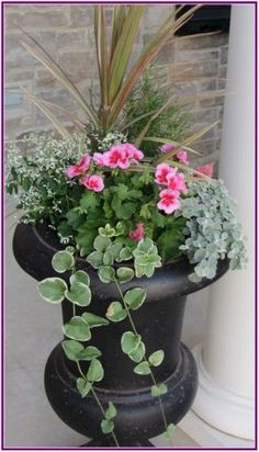 frost, vinca vine, spike and fillers – LOVE it for the front porch planters!diamond frost, vinca vine, spike and fillers – LOVE it for the front porch planters! Container Flowers, Flower Planters, Container Plants, Container Gardening, Flower Pots, Gardening Tips, Gardening Gloves, Geranium Planters, Urn Planters