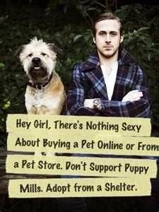 Yes, adopt from shelters or reduce it yourself the streets are full of no one who loves them....Puppy mills are AWFUL GREEDY assholes!