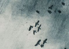 Rook Sky Etching Bird Etching Print by williamwhiteart on Etsy, $100 ...