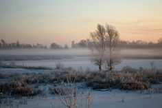 Natuurfotografie met Ben: Winter in Nederland