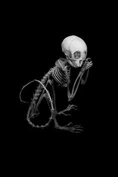 Juvenile Monkey Skeleton. Articulated by Ryan Matthew. Photo by Sergio Royzen. by myChelsss