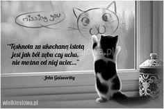 Tęsknota za ukochaną istotą jest jak ból... #Galsworthy-John,  #Tęsknota-i-żal Terrier Puppies, Boston Terrier, Loving Someone, You Really, Snoopy, Make It Yourself, Sayings, Quotes, How To Make