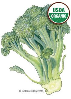 $1.79  Broccoli Di Cicco Organic HEIRLOOM Seeds. For Feb planting in the garden or container. botanicalinterests.com