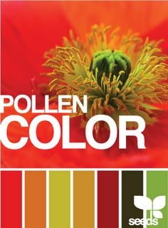 paint colors. Couldn't sit pinning just because of the pollen color name!