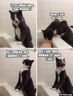 Les chats et l'eau... - Be-troll - vidéos humour, actualité insolite