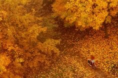 Golden Autumn Photo by REgiNA — National Geographic Your Shot