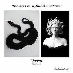 Taurus is Medusa Taurus Art, Astrology Taurus, Zodiac Signs Taurus, Taurus Woman, Zodiac Horoscope, Astrology Signs, Horoscope Funny, Astrology Chart, Astrology Houses