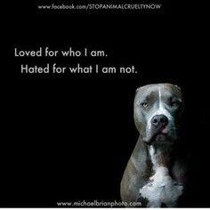 I love all bullies!!