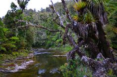 Image result for waitotara forest