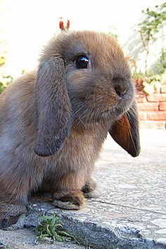 i am a fool for those floppy ears oh i wish my husband had floppy ears hhaha ;DDD ahhaha
