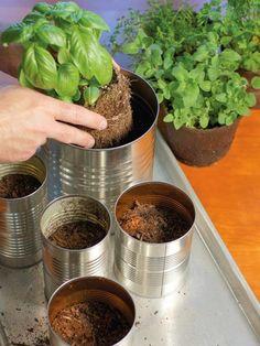 Materiais: 6 latas de alumínio; Mudas de temperos (manjericão, alecrim, salsa, orégano...) Fita; Cartolina; 1 garfo velho; Tesoura p...