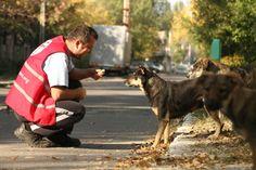Românii sunt împotriva uciderii câinilor fără stăpân | Totul despre animale