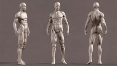 ArtStation - Male Anatomy, Xiong Lin