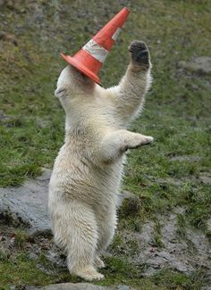 Polar bears are like regular bears, except they have white fur, live in the Arctic, and always act like they're the drunkest kid at the party. | 24 Times Polar Bears Were The Party Animals Of The Animal Kingdom