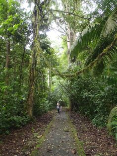 La Selva Biological Research Station, Costa Rica