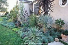 Front Yard Garden Design Southern California front yard garden border with succulents and blue fescue grass - Succulent Landscaping, Tropical Landscaping, Landscaping With Rocks, California Front Yard Landscaping Ideas, Southern Landscaping, Arizona Landscaping, Tropical Backyard, Landscaping Design, Landscaping Plants
