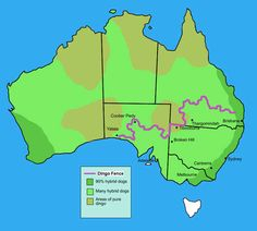 Dingo fence, the world's longest fence. 17 Maps Of Australia That Will Make Your Mind Boggle Facts About Australia, Brisbane Queensland, Dog Area, Australia Map, Western Australia, Boggle, World Geography, Great Barrier Reef, Aussies