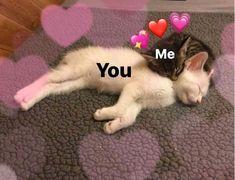 Comics Spideypool y Stony – Funny Memes Cute Cat Memes, Cute Love Memes, Funny Memes, Cute Love Pics, Dankest Memes, Funny Quotes, Cute Cats, Funny Cats, Memes Amor