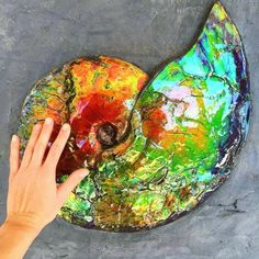 Ammonites were one of nature's most magnificent creations. Over time, as these creatures fossilize, many become extremely colorful & covered with Ammolite like this one that was found in Southern Alberta, Canada. Photo: The Crystal Spirit. Minerals And Gemstones, Crystals Minerals, Rocks And Minerals, Stones And Crystals, Gem Stones, Cool Rocks, Beautiful Rocks, Mineral Stone, Rocks And Gems