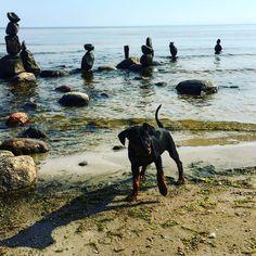 Roja: Does it get any better? #beach #sculpture #puppy Puppies, Sculpture, Mountains, Beach, Nature, Travel, Instagram, Cubs, Naturaleza