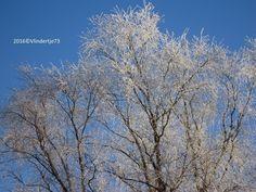 Zo mooi, al dat wit van de vorst in de bomen...