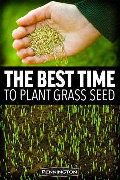 Gardens Discover The Best Time to Plant Grass Seed Best Grass Seed Lawn Grass Seed Types Growing Grass From Seed Planting Grass Seed How To Plant Grass How To Grow Grass Bermuda Grass Seed Lawn Care Tips Lawn And Landscape Best Grass Seed Lawn, Grass Seed Types, Growing Grass From Seed, Planting Grass Seed, Bermuda Grass Seed, Lawn Repair, Lawn Care Business, Lawn Care Tips, Lawn And Landscape