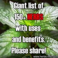 Giant List Of 150+ Herbs With Uses & Benefits | Health & Natural Living