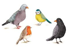 Antonia Woodward Illustration - antonia woodward, commercial, trade, picture book, picturebook, novelty, sweet, fiction, traditional, painted, birds, pigeons, robins, animals, cute, greetings cards,