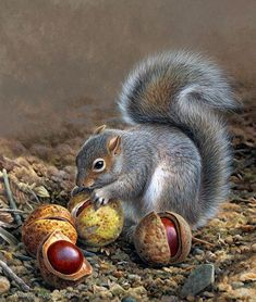 Andrew Hutchinson, Squirrel and chestnuts. ❣Julianne McPeters❣ no pin limits Nature Animals, Animals And Pets, Baby Animals, Funny Animals, Cute Animals, Art Nature, Wildlife Paintings, Wildlife Art, Animal Paintings