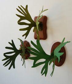 paper staghorn ferns