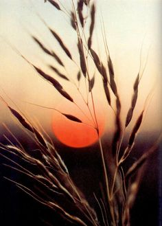 Sunset in the wheat fields. (I know this is just grass, but bear with me..)