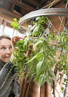 kuva Fungi, Plant Hanger, Flower Art, Flora, Plants, Dining Room, Roses, Gardening, Kitchen
