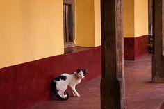 Cat, Gokarna