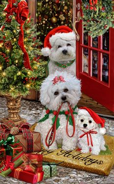 --Bichon Frise Christmas Welcome