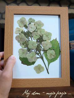 flowers, garden, picture, diy, hydrangea