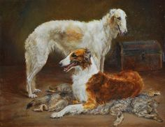 Borzoi dogs resting.