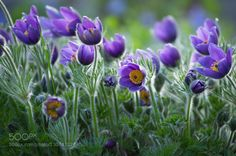 Flowers by tomforemail. Please Like http://fb.me/go4photos and Follow @go4fotos Thank You. :-)