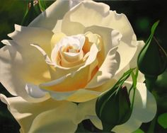 Luminous Yellow Beauty by Brian Davis So very beautiful! Brian Davis, Stay Wild Moon Child, Fruit Painting, Z Arts, Fashion Painting, Watercolor Rose, Flower Pictures, Exotic Flowers, Beautiful Roses