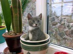 Pot_Of_Cat
