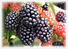 Fruit Plants, Bramble, Ikebana, Blackberry, Orchids, Flora, Berries, Gardening, Blackberries