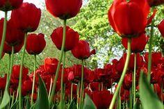 O homem de espírito nobre rega as flores para outros e para si reserva os espinhos.