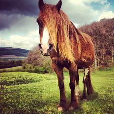 Pretty horse .W. Emo Horse! XD