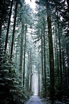 unwrittennature:  Pathway through the trees (by Digital Webb)