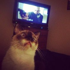This cat watching Breaking Bad. | The 40 Most Awkward Cats Of 2013